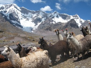Trekking in Peru near Machu Picchu at the mountain of Ausangate